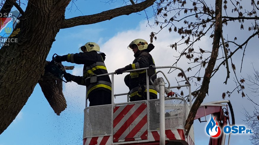 Kolejne zagrożenia po ostatniej wichurze OSP Ochotnicza Straż Pożarna