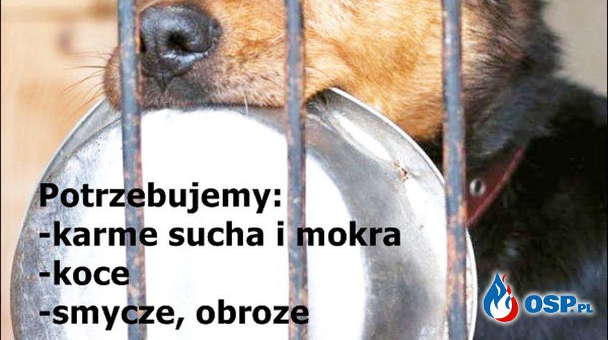 Zbiórka na schronisko dla bezdomnych zwierząt w Turku. OSP Ochotnicza Straż Pożarna