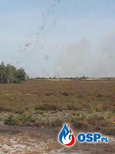 20.09-Pożar na poligonie w Świętoszowie OSP Ochotnicza Straż Pożarna