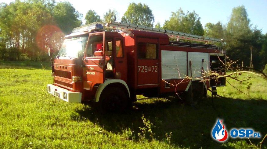 Pożar zarośli OSP Ochotnicza Straż Pożarna