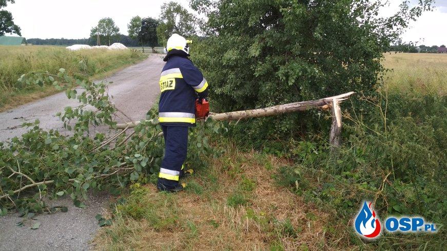 Przewrócone drzewo w Linówcu OSP Ochotnicza Straż Pożarna