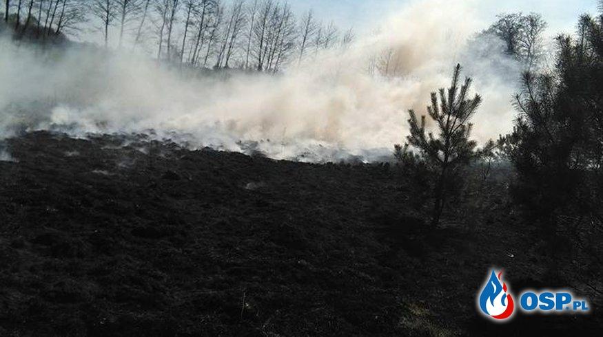 Pożar suchej trawy w Malińcu OSP Ochotnicza Straż Pożarna