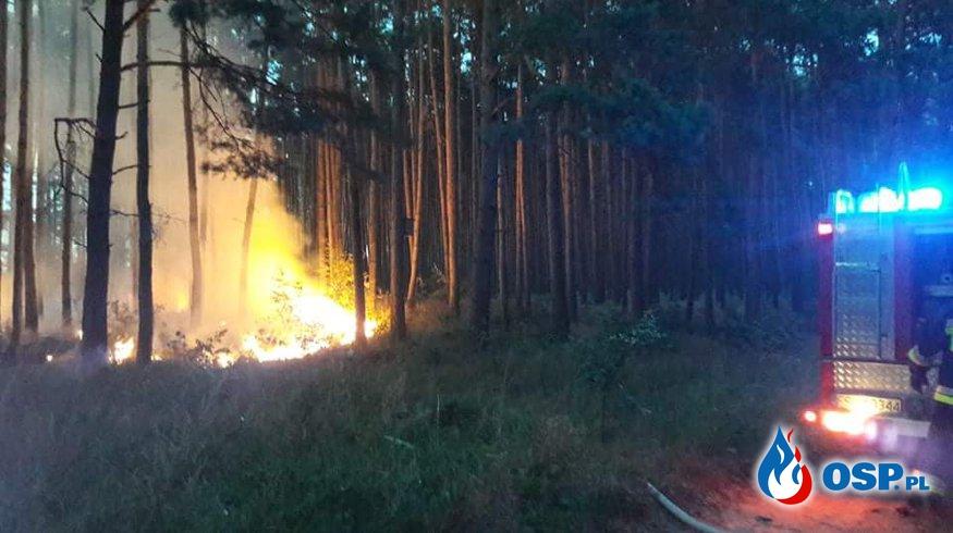 Kolejny pożar Lasu !! OSP Ochotnicza Straż Pożarna