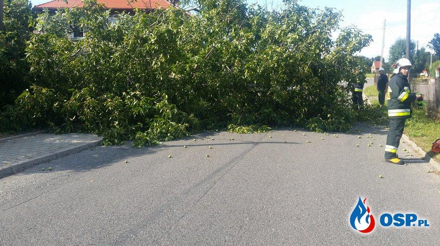 Konar drzewa blokujący drogę w Białej OSP Ochotnicza Straż Pożarna
