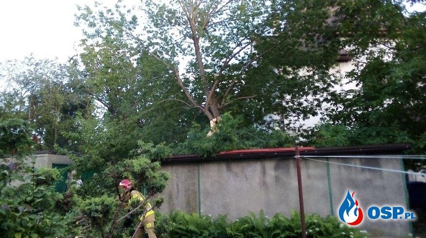 Powalone drzewo przy ulicy Staropoznańskiej OSP Ochotnicza Straż Pożarna