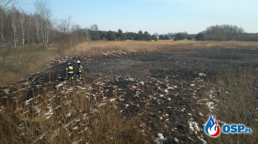Pożar nieużytków w Przecławiu przy ul.Weneckiej. OSP Ochotnicza Straż Pożarna