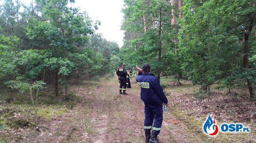 Skuteczne poszukiwania zaginionego grzybiarza. OSP Ochotnicza Straż Pożarna