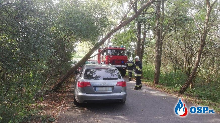 Miejscowe zagrożenie - Powalone drzewo OSP Ochotnicza Straż Pożarna