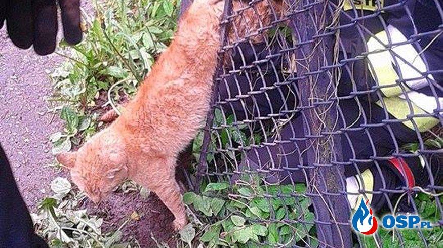 Uwięziony kot OSP Ochotnicza Straż Pożarna