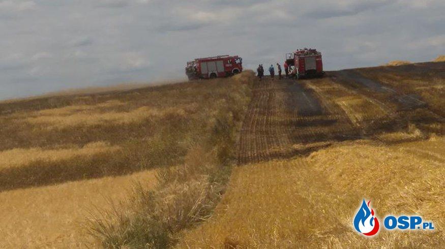 Pożar zboża na pniu OSP Ochotnicza Straż Pożarna