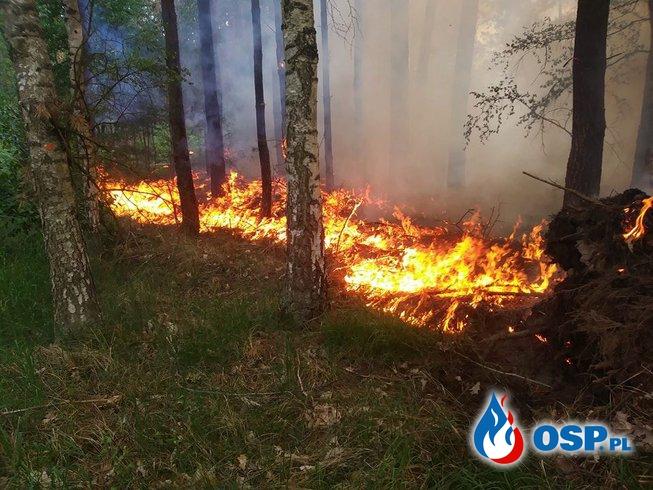 Zdarzenia ratowniczo gaśnicze Maj 2018 OSP Ochotnicza Straż Pożarna