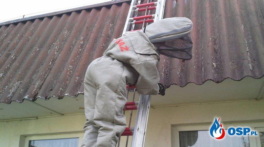 Pszczoły/Osy! OSP Ochotnicza Straż Pożarna