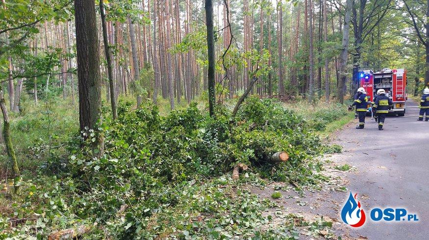 Drzewo nad jezdnią OSP Ochotnicza Straż Pożarna