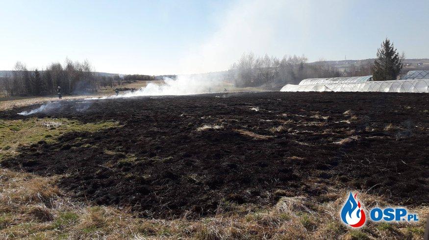 Pożar traw przy ul. Łukasiewicza OSP Ochotnicza Straż Pożarna