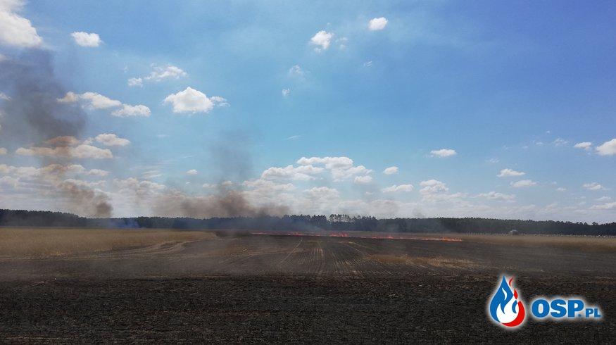 Pożar zboża na pniu- Budachów, Pożar lasu- Siedlisko. 16.07.2018 OSP Ochotnicza Straż Pożarna