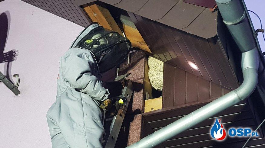 Coraz częstsze wyjazdy do agresywnych os OSP Ochotnicza Straż Pożarna
