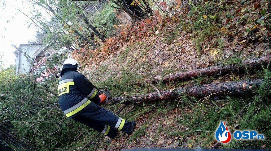 Powalone drzewo na drogę dojazdowa do domów w Biertowicach  OSP Ochotnicza Straż Pożarna