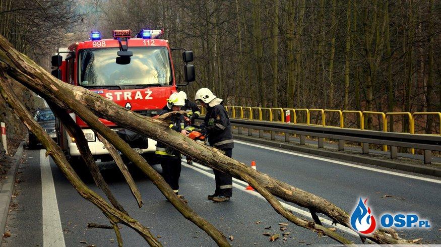 Drzewo na DK-3. OSP Ochotnicza Straż Pożarna