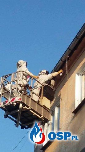 Sezon na owady błonkoskrzydłe uważamy za OTWARTY OSP Ochotnicza Straż Pożarna
