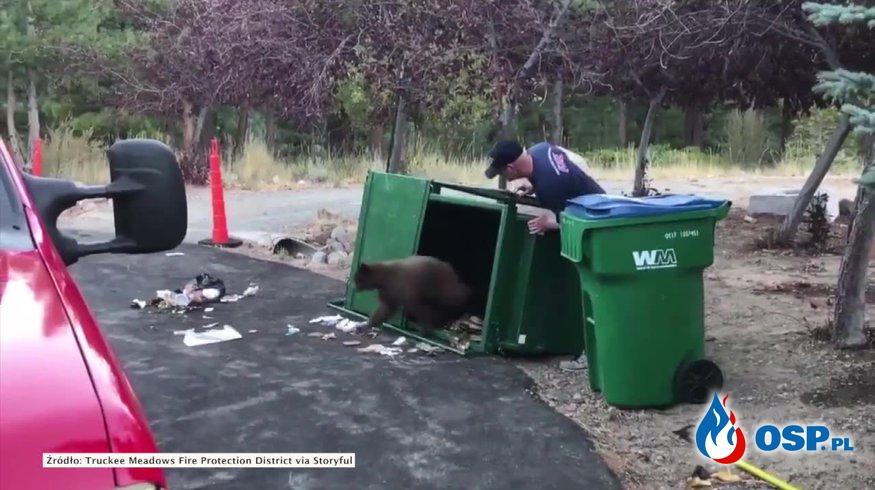 Trzy małe niedźwiadki zatrzasnęły się w śmietniku. Pomogli strażacy. OSP Ochotnicza Straż Pożarna