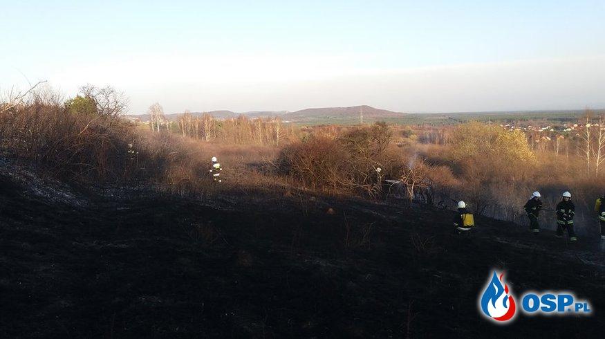 Pożar traw - ul. Poległych w Żarkach OSP Ochotnicza Straż Pożarna
