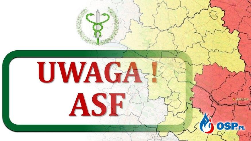 Gmina Słubice w czerwonej strefie ASF OSP Ochotnicza Straż Pożarna