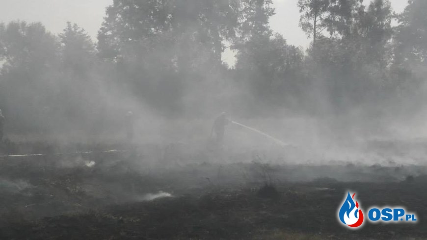 Pożar torfowiska obok rzeki Brynica. (28.08.2015) OSP Ochotnicza Straż Pożarna