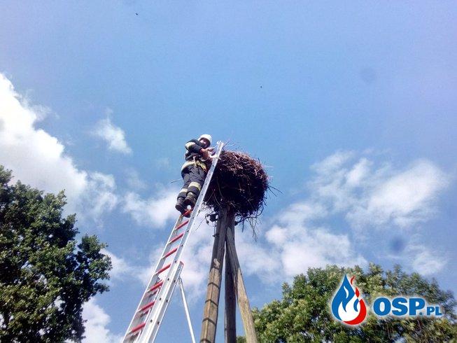 Na ratunek młodemu bocianowi OSP Ochotnicza Straż Pożarna