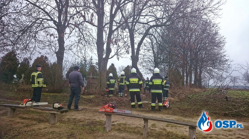 Wycinka drzew - Ostrowo OSP Ochotnicza Straż Pożarna