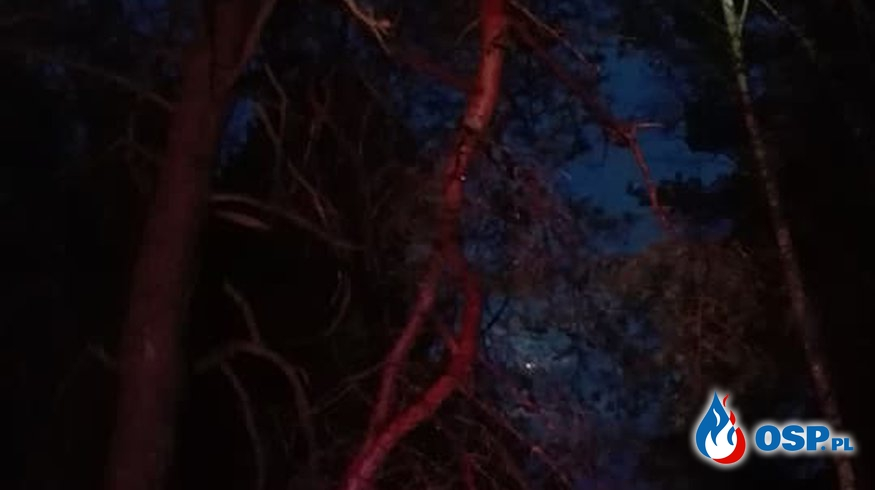 ALARM! Konar nad drogą-Bytnica 31.10.2017 OSP Ochotnicza Straż Pożarna