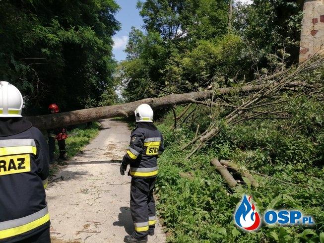 Powalone drzewo na drogę gminną OSP Ochotnicza Straż Pożarna