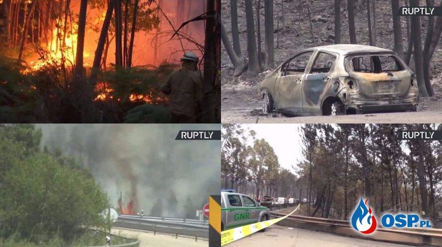 Rośnie liczba ofiar, ogromnych pożarów lasów w Portugalii. Nie żyją co najmniej 62 osoby! OSP Ochotnicza Straż Pożarna