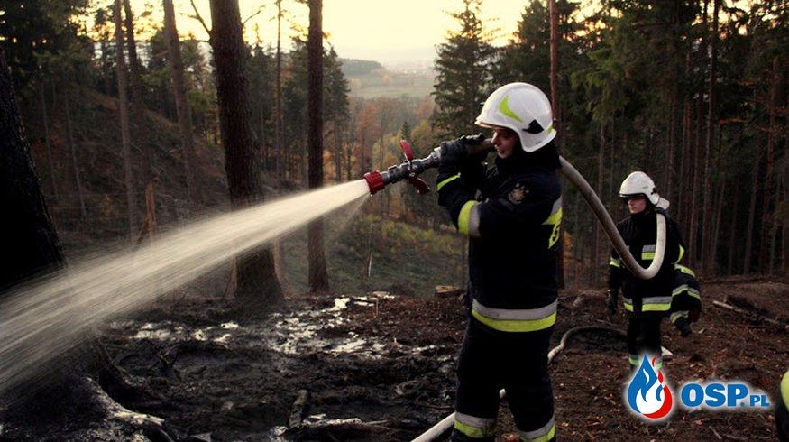 Jeżów Sudecki: Pożar lasu na Górze Szybowcowej. OSP Ochotnicza Straż Pożarna