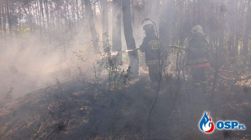 Pożar lasu i łąki w Stoczku OSP Ochotnicza Straż Pożarna