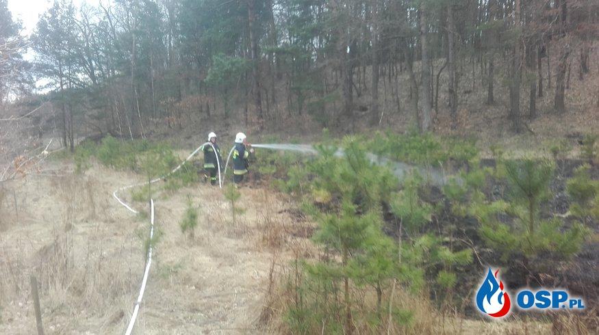 21.03-Pożar nieużytków w Osieczowie OSP Ochotnicza Straż Pożarna