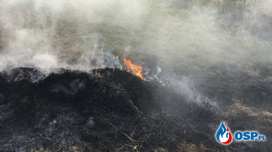 Dziwiszów: Pożar traw. OSP Ochotnicza Straż Pożarna