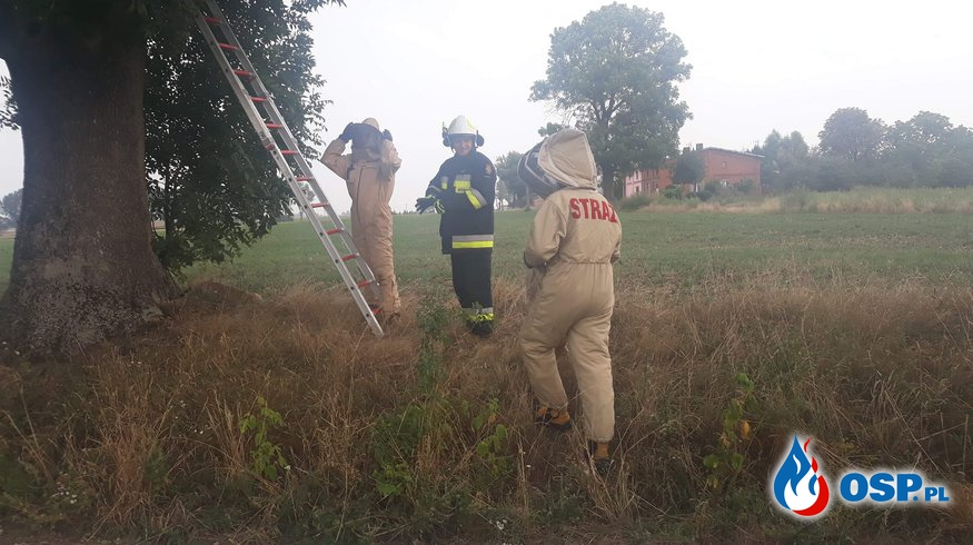 24.08.18 17:46 - GNIAZDO SZERSZENI W DRZEWIE, SKALMIEROWICE OSP Ochotnicza Straż Pożarna