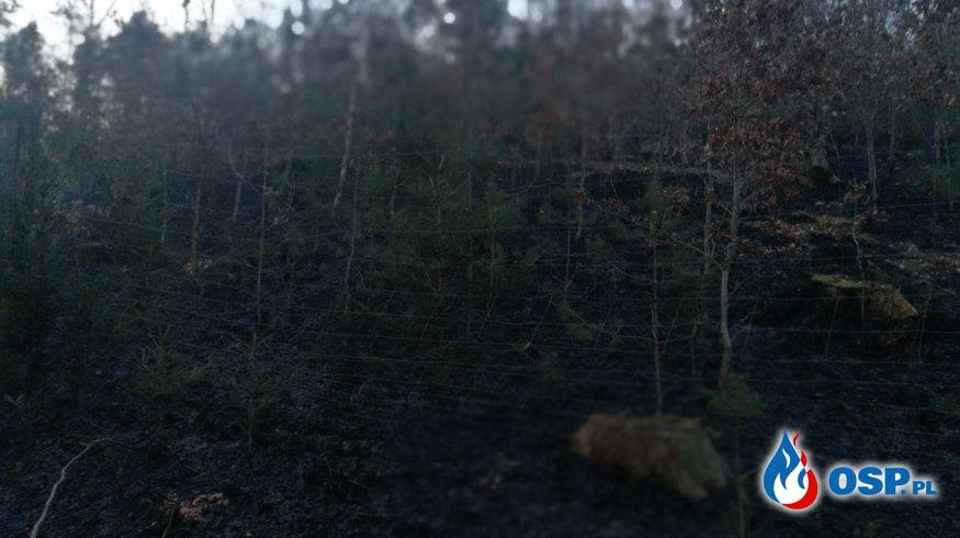 Pożar lasu 02.04.19 i brak karetki 03.04.19 OSP Ochotnicza Straż Pożarna