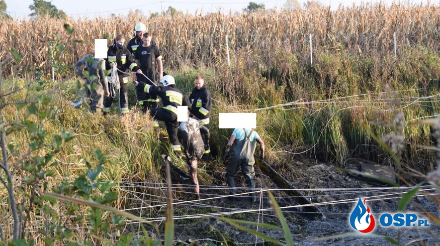 !!! Osoba uwięziona w bagnie !!! OSP Ochotnicza Straż Pożarna