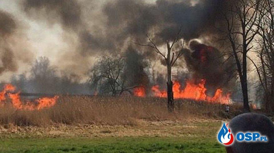 Pożar traw w rejonach Głuska OSP Ochotnicza Straż Pożarna