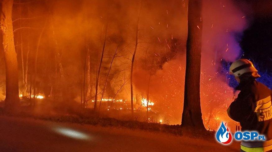 Pożar poszycia leśnego OSP Ochotnicza Straż Pożarna
