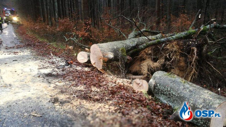 Powalone drzewo 04.03.2019 OSP Ochotnicza Straż Pożarna