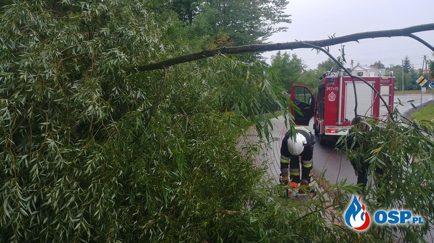 Powalone drzewo na ul. Kościelnej OSP Ochotnicza Straż Pożarna