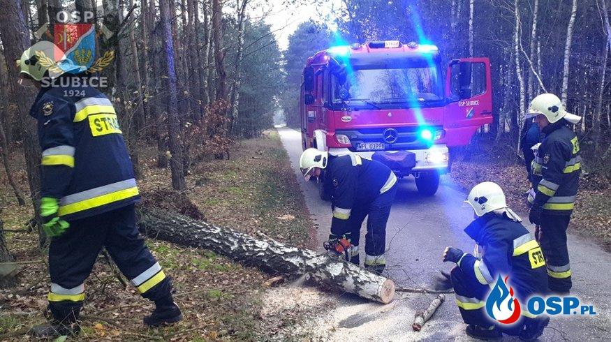 Brzoza wyrwana z korzeniami zablokowała drogę OSP Ochotnicza Straż Pożarna