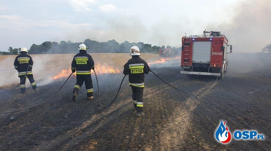 Pożar ścierniska w Mołstowie (pow. Gryfice) OSP Ochotnicza Straż Pożarna