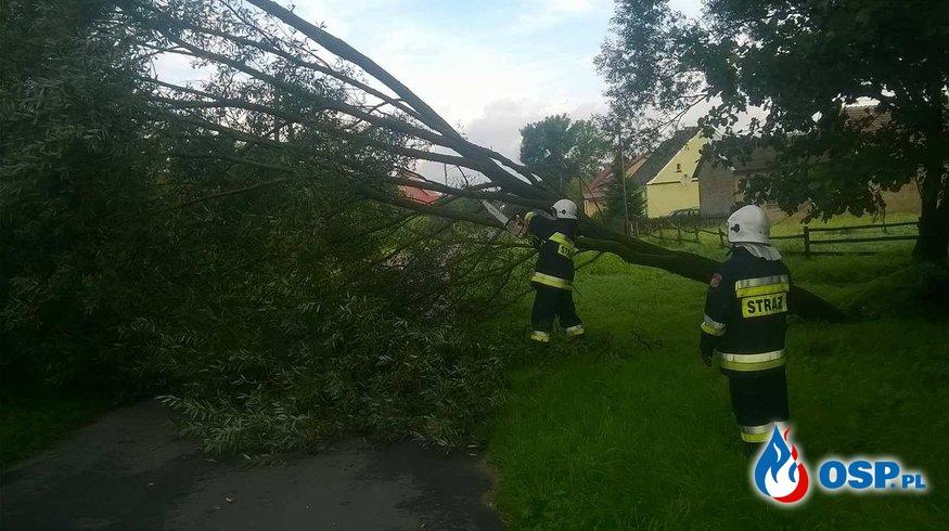 Powalone drzewo na linie energetyczną oraz zwisający konar. OSP Ochotnicza Straż Pożarna