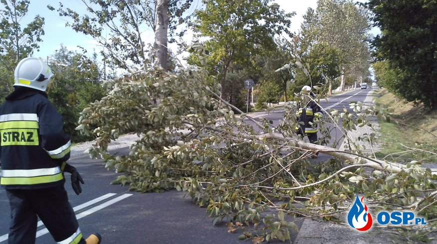 Powalone Drzewo! OSP Ochotnicza Straż Pożarna