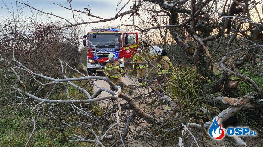 Dwie interwencje do wiatrołomów OSP Ochotnicza Straż Pożarna