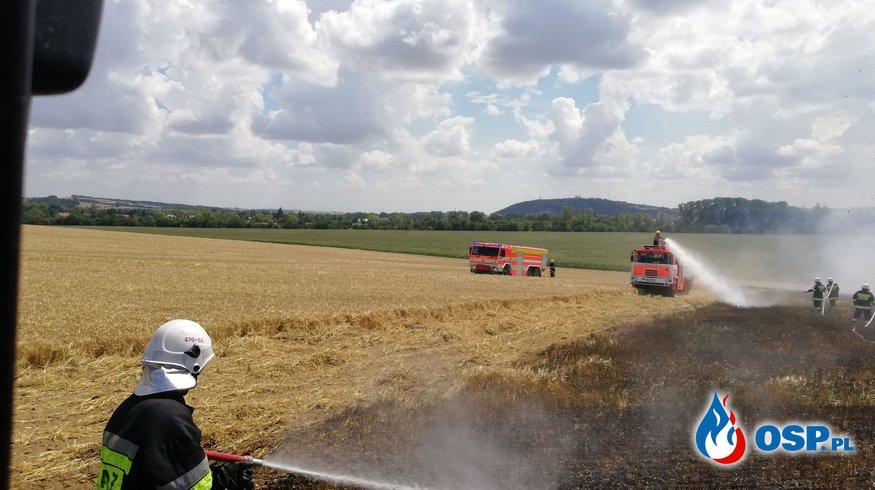 Pożar zboża na granicy PL-CZ OSP Ochotnicza Straż Pożarna