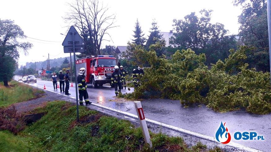Powalone drzewo - ul. Krakowska w Babicach OSP Ochotnicza Straż Pożarna